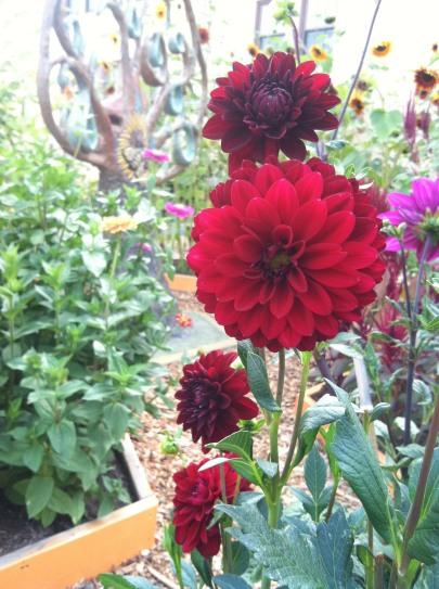 Pollinator Tree_Garden2